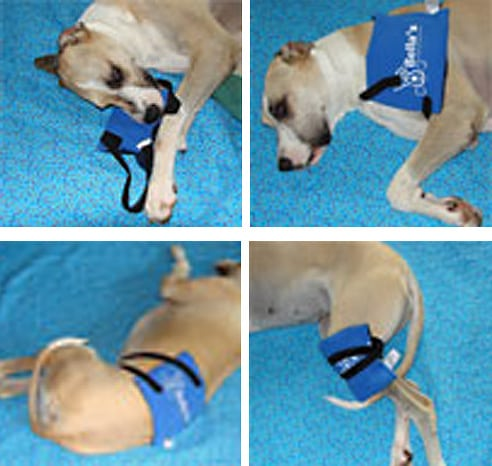 Pain Relief Pack Helped Bella Dog with Pet Arthritis Pain