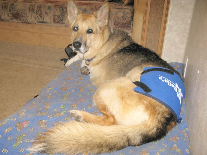 Pain Relief Pack Eases Pet Arthritis Pain and Dysplasia